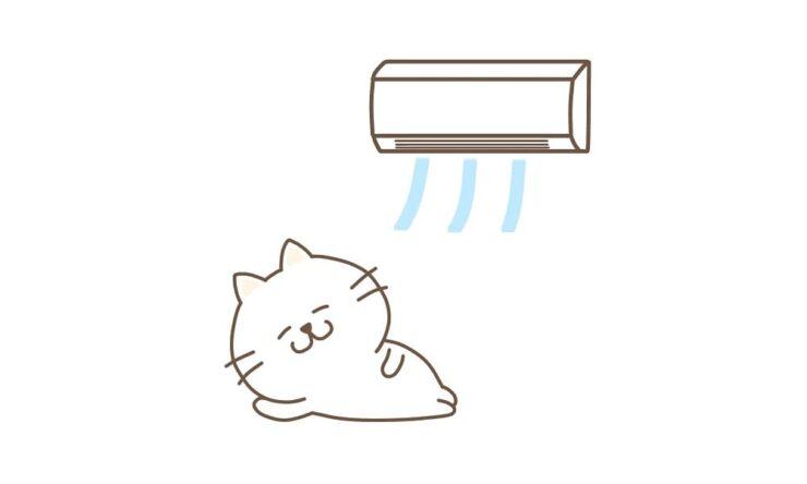 エアコンで涼む猫